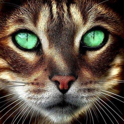 chat aux beaux yeux verts blog de misscookaii. Black Bedroom Furniture Sets. Home Design Ideas