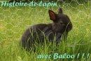 Photo de histoire-de-lapins
