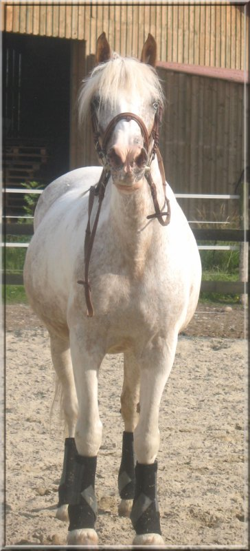 """Si tu entends """"ce n'est qu'un cheval"""", contente-toi de sourire, ils ne peuvent pas comprendre."""