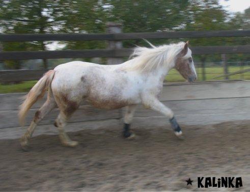 """"""" Un homme sans femme, est un cheval sans bride""""."""