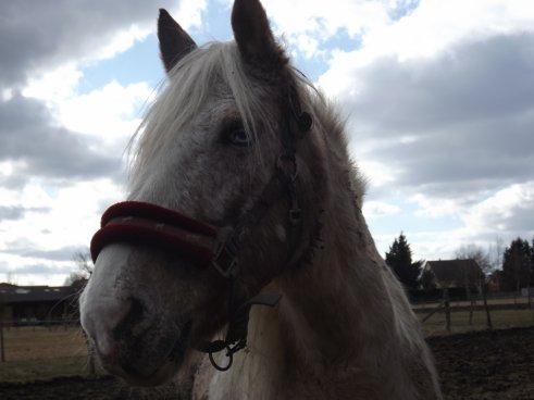 Je peux pas être amoureuse, j'ai un poney ♥