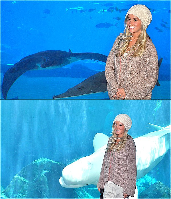 "-01/11/12 :  Ashley a été repéré allant au NOBU RESTAURANT avec Emily Current & Meritt Elliott a L.A.+ 20/10/12 : Ashley visitant "" Georgia Aquarium "" a Atlanta. Tenue sympa & decontracter elle s'est bien amuser avec les poissons :) !  -"