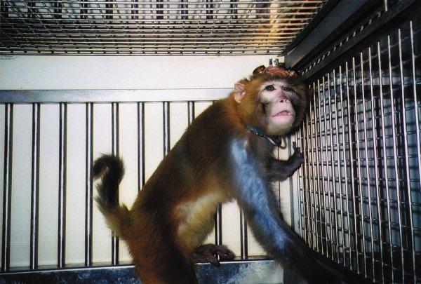 L'expérimentation animal, moi je dit NON !