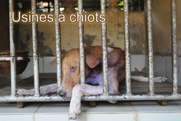 Maltraitance chiens