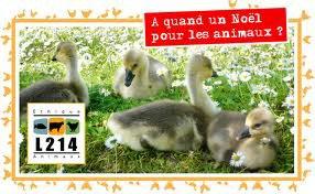 Tous contre le foie gras !