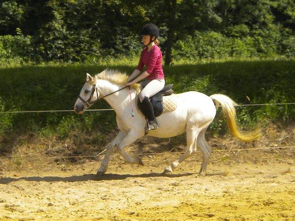 Les chevaux sont des créatures mystérieuses et divines. [Sagesse indienne]