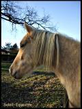 Photo de Soleil-Equestre