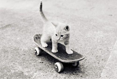 Images de chatons .