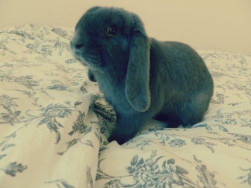 Images de lapins .