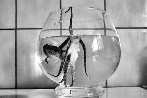Images de petits (et grands ) poulpes .