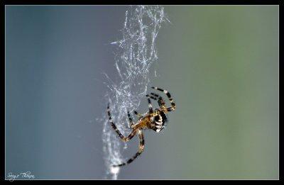 Interdit au arachnophobe