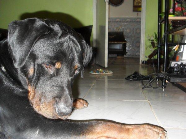 mon chien achillllllll <3