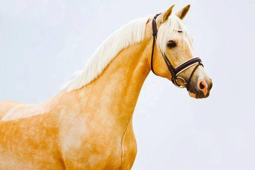 ; Ma passion ( L'équitation ).