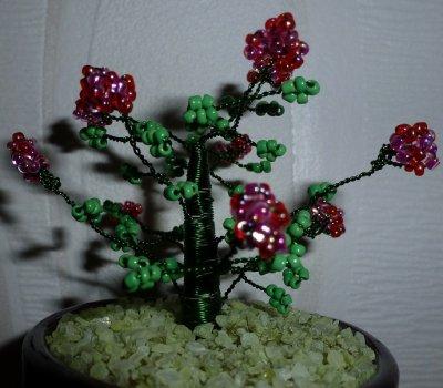 Voici ma première plante, un camélia