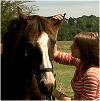 Horse-Lullaby  [♫]
