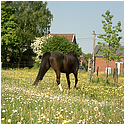 Photo de Horse-Lullaby