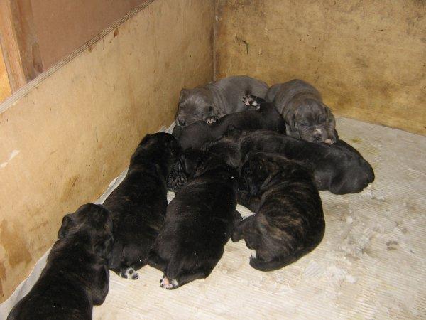 elsa con i suoi cuccioli
