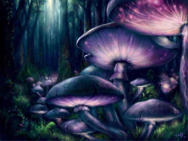 La nuit ces champignons servent de repères aux voyageurs égarés