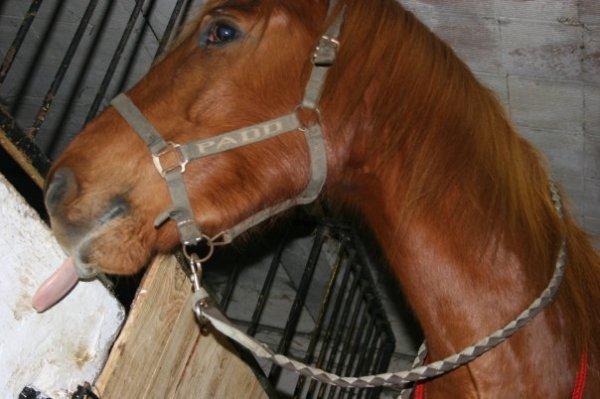 Les chevaux n'ont rien de plus cher que leur écurie.