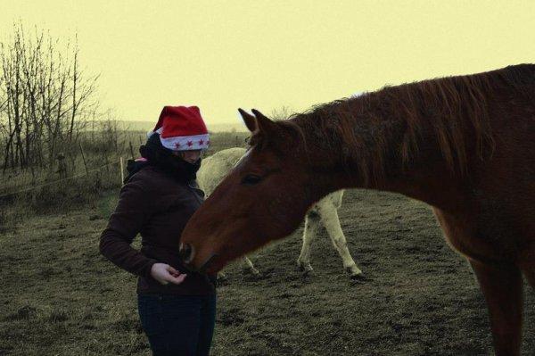 #>Il n'y a pas de secrets aussi intime que ceux d'un cheval et de son cavalier.<#