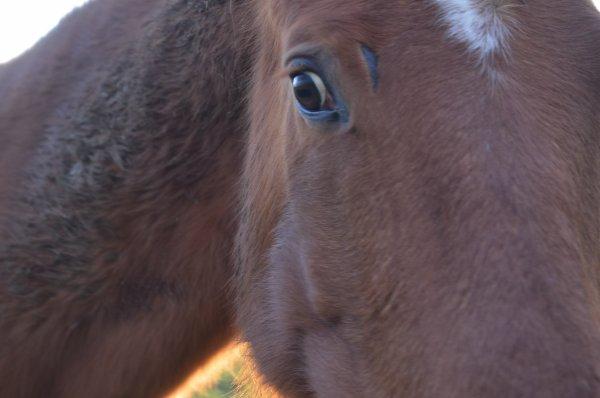 Parce qu'il n'y a ... Que dans les yeux d'un cheval ... Que l'on peut voir la vraie liberté.