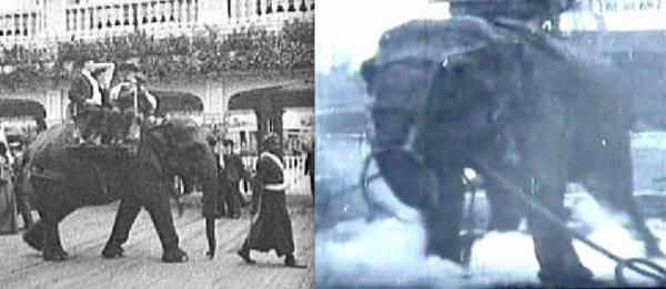 4 janvier 1903. Topsy, l'éléphante tueuse d'hommes, est électrocutée par Thomas Edison.