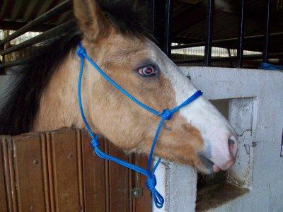 Equitation éthologique, Méthode de La Cense