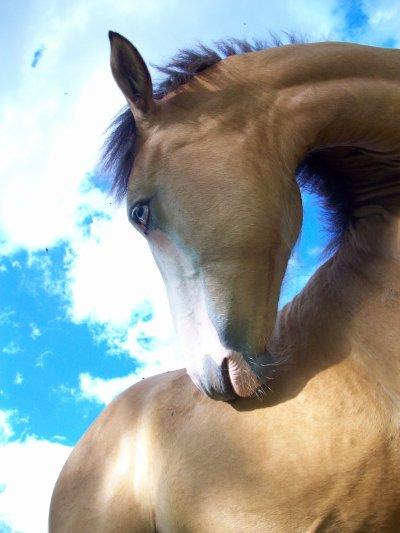 Pour toi mon cheval