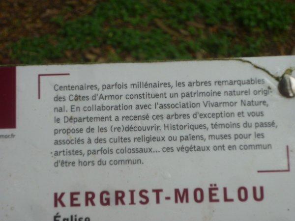 Kergrist  Moêlou et ses ifs séculaires (22) lundi 29/05
