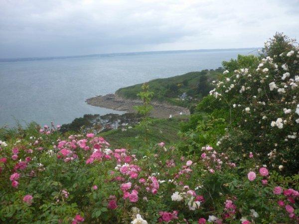 Lundi 5 juin Trebeurden et la pointe de Bihit