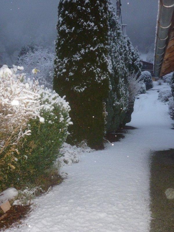 1ère neige ce mercredi 29 Novembre et photo de Candice + dernier géranium