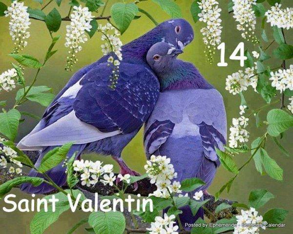 14 Février c'est la St Valentin