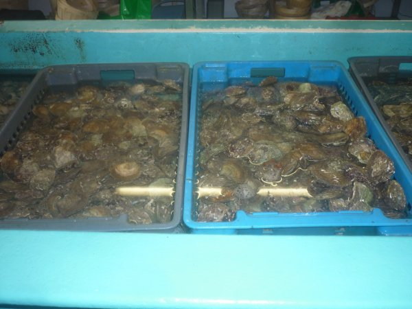 jeudi 17 mai sur belon...les huîtres!