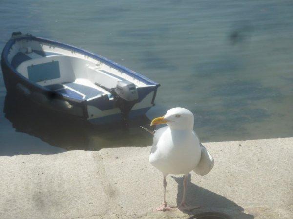 dimanche de Pentecôte   2O mai  traversée Ste  Marine-Bénodet