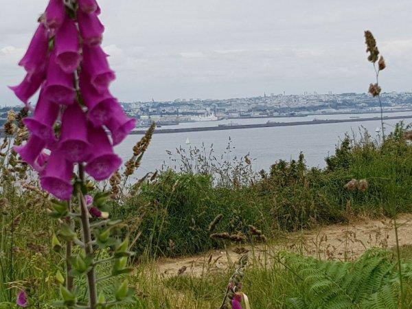 samedi 2 juin   rade de Brest en face pointe des Espagnols + Camaret