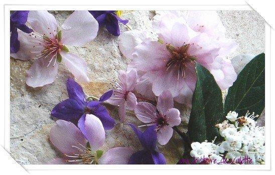 ViolettexPurple, le blog annexe de une-histoire-de-violette !