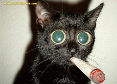 il ne faut pas trop fumé petit chat !!!!!