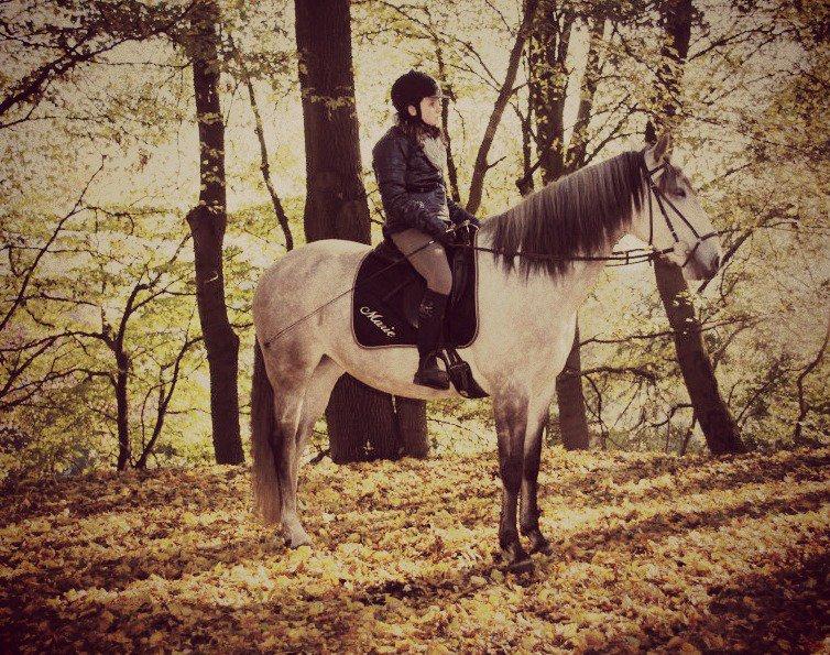 Les chevaux plus qu'une passion<3!