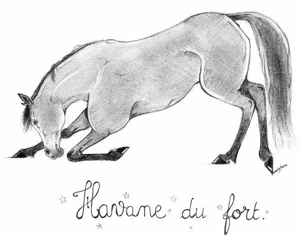 Serie crayon papier mes dessins - Dessins de chevaux facile ...