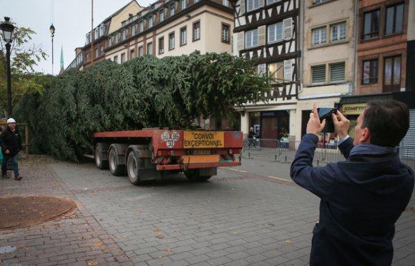 Le sapin de Noel de Strasbourg est arrivé !!