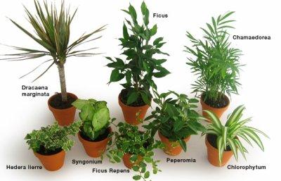 Les plantes, de véritables petites usines à dépolluer !