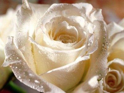 Une Belle Fleur Michae Scofeild