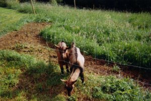Chats, Chèvres, Moutons, Poules, Canards, ...