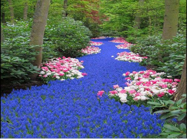le fête des fleurs Magnifiques