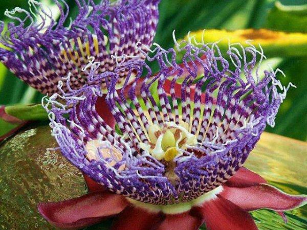 des fleurs rares et de toute beauté pour vous !!....