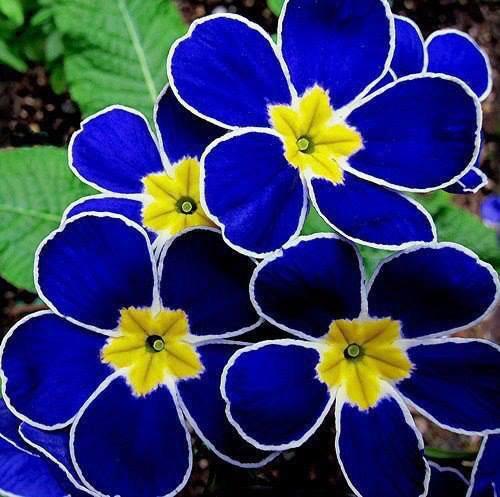 suite de ses magnifique fleurs***