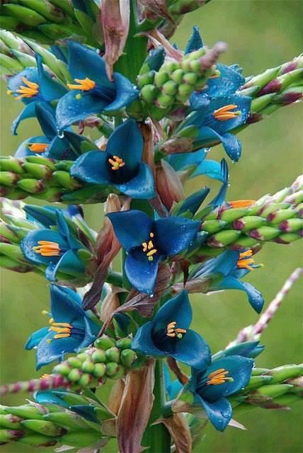 pour votre plaisir ,suite des fleurs rares