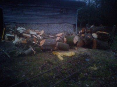 chantier de 5 arbres