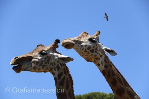 Journée au zoo