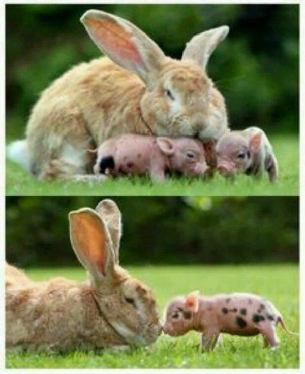 L'amitié entre les animaux c'est beau...